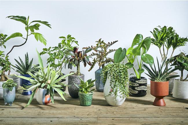 植物と空間のプロ集団厳選、プロ品質の植物が販売開始!